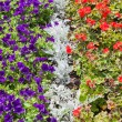 Garden of different colours flowers - Stock Photo