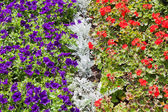 Garden of different colours flowers — Stock Photo