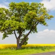 Foto Stock: Beautiful tree