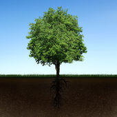 Tree and roots — Stock Photo