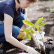 Woman planting seedling, focus on plant — Stock Photo