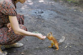 Girl feed funny little squirrel — Stock Photo
