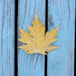 Stock Photo: Beautiful autumnal maple leaf