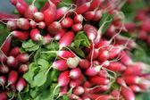 Fresh radish at farmers market — Stock Photo