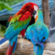 Foto de Stock  : Couple macaw