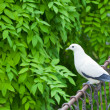 Stock Photo: White bird