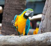 Colorido guacamayo — Foto de Stock