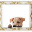 Dog with frame — Stock Photo
