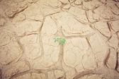 绿色的植物生长槽砂 — 图库照片