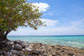 Beach with stones — Stock Photo