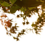 Leaves and bright sun light — Stock Photo