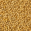 Soy bean pattern — Stock Photo