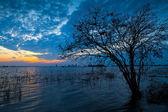 мертвые голый дерево — Стоковое фото