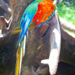Stock Photo: Macaw sitting