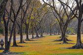 Wayside trees — Стоковое фото