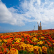 Field of red flower — Stock Photo