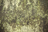 Wall wet cement — Stock Photo
