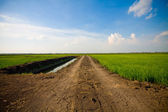 Green grass and way — Stock Photo