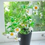 Black vase and flower — Stock Photo