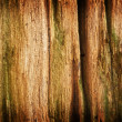 Wood pattern — Stock Photo #13622712