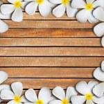 Plumeria flower frame — Stock Photo #13627116