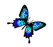 Paint watercolor butterfly — Stock Photo