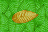 Brown leaf on Green — Stock Photo
