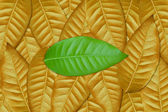 Green leaf on brown — Stock Photo