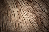 Bark pattern — Stock Photo