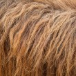 Horse fur - Stock Photo