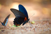 Butterfly on the ground — 图库照片