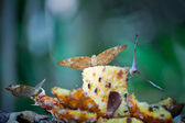 Butterflies eating fruit — Stockfoto
