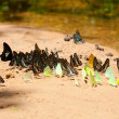 group of butterflies — Stock Photo