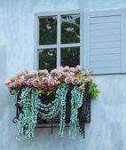 Fönster och blomma — Stockfoto