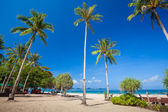 Tropical beach with palms — Stock Photo