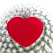 Royalty-Free Stock Photo: Heart on cactus