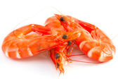 Shrimp on white background — Stock Photo