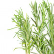 Rosemary on white background — Foto Stock