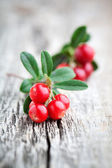 Lingonberries — Stock Photo