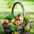 Apples in basket — Stock Photo #12463539