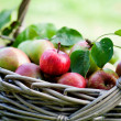 Apples in basket — Stock Photo #12463542