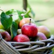 Apples in basket — Stock Photo #12463543