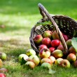 Apples in basket — Stockfoto #12463544