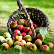 Apples in basket — Stockfoto #12463546