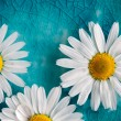 Daisies floating in water — Stock Photo #12463571
