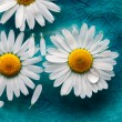 Daisies floating in water — Stock Photo #12463582