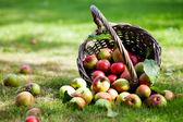 Jabłka w koszyku — Zdjęcie stockowe