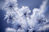 Detalhe da flor congelada — Foto Stock