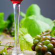Stock Photo: Red wine with grapes