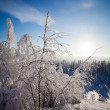 Lapland Finland - Stock Photo